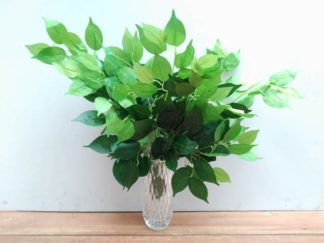 Planta extja035