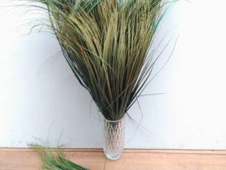 Planta extja038