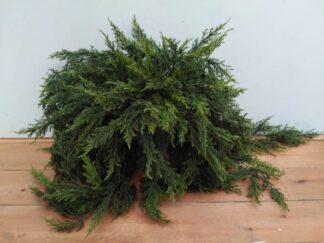 Planta extja040
