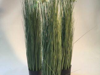 Planta extja061