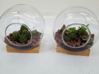 Cactus maceta decva135