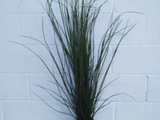 Planta extja075