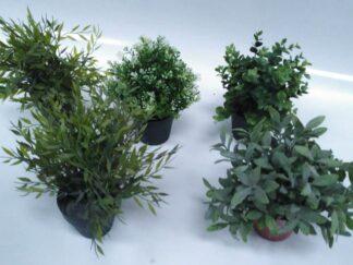 Plantas extja085