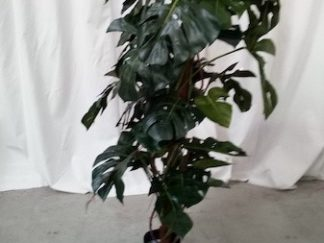 Planta artificial árbol 180cm